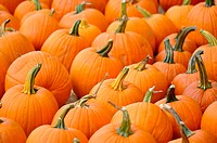 Pumpkin Patch for Halloween Holiday