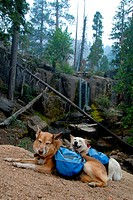 Two happy dogs with backpacks paused while hiking on a mountain trail, waterfall in background.