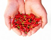 Metaphor about small but hot harvest of chili peppers.