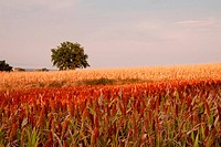 Landscape of fields of different colors with tree on the background