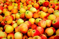 Fresh harvested apples in various shades of red and yellow
