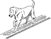 vector _ dog agility , isolated on background