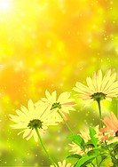 Bright sun and yellow flowers