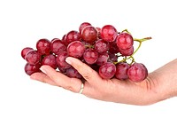 Bunch of pink grapes in palm isolated on the white background