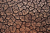 Cracked, parched land at the onset of a drought