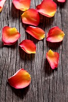 Rose petals on the wooden background. DOF