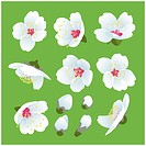 Spring blooming illustration for design