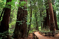 California, Muir Woods