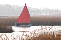 Sailing boat on open water beside reedbed, Hickling Broad, River Thurne, The Broads N P , Norfolk, England, march