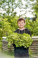 Boy holding heads of lettuces, lettuce harvest
