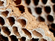 Honey bees nest close up picture with shallow depth of field
