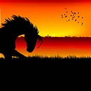 silhouette view of a horse, sunset background