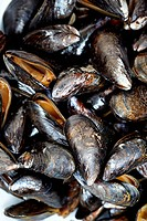 Closeup of uncooked mussels. There is nobody viewable in the image