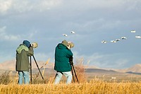 Two photographers with telephoto lens photograph Sandhill cranes and snow geese at the Bosque del Apache National Wildlife Refuge, near San Antonio an...