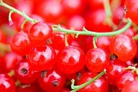 ripe red currant background
