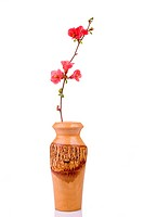 red and fresh fruit_tree flower in wooden vase isolated on white