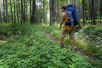 A woman with backpack hikes on Ramsey´s Draft trail in Virginia.