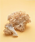 White Maitake Mushrooms