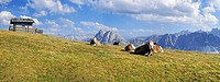 Cows on Aferer Alm alp on Plosen mountain, with the Afer Geisler group and Peitlerkofel mountain, Wuerzjoch ridge, Villnoesstal valley, Dolomites, pro...