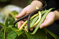 Woman Holding String Beans