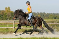 Young rider on an Icelandic horse riding canter