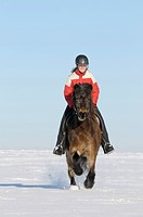 Young rider on an Icelandic horse galloping in winter