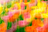 Long exposure with fast motion blur. In camera effect. Abstract multicolored patterns from spring garden.