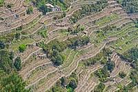Landwirtschaftliche Nutzung der steilen hänge in der Cinque Terre mit Hilfe von Terassenanbau