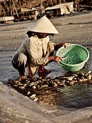 Vietnamese woman with hat sorting fish at the beach, fishing village, Mui Ne, Binh Thuan, Vietnam