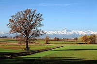 Italy, Europe, Cuneo, fields, tree, mountains to, Alps, scenery