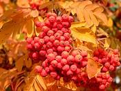 Früchte und Herbstlaub