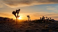 USA, California, Joshua Tree National Park at sunset