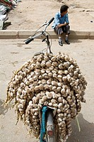 Fresh Garlic vendor in the street market of Kashgar, China.