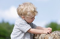 Germany, Bavaria, Boy exploring tree trunk, close up