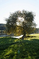 Germany, View of River Ruhr with tree