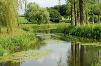 River flowing through wet water meadows, River wensum, Norfolk, England, July