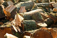 Detail of logs