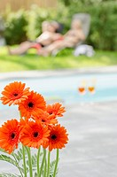 Bunch of orange Gerberas by the poolside