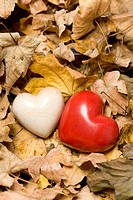 Two hearts among autumn leaves