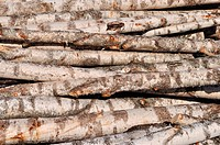 Stack of birch logs background