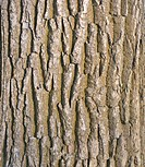 Old tree bark surface texture