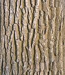Old tree bark surface texture