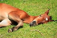 colt brown