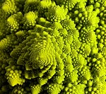 abstract romanesco cauliflower
