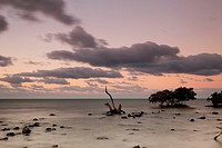 USA, Florida, Big Pine Key, Mangrove trees at sunrise