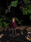 Tiny Boy Standing on Blackberries