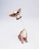 Chihuahua Toy Dog