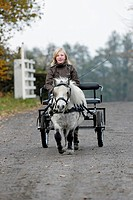 Shetland Pony pulling a carriage