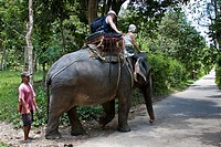 Tourists on an elephant ride, Ko Samui, Thailand