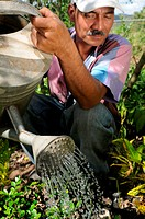 Nicaragua, Macuelizo, Farmer watering plants in the mountainous Nueva Segovia